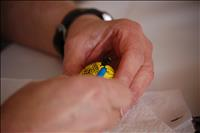 thumbnail of Pysanka Workshop 2014 (96)